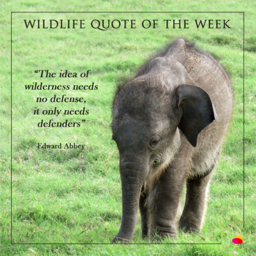 World Wildlife Day 2020 Quotes