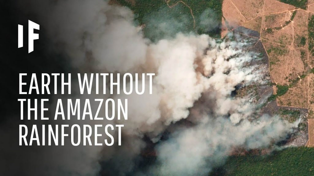 AMAZON UNDER THREAT: WITHOUT FOREST