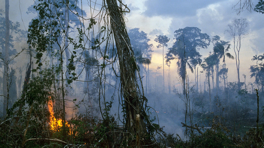 AMAZON UNDER THREAT:Which country is suffering the biggest threat to Amazon