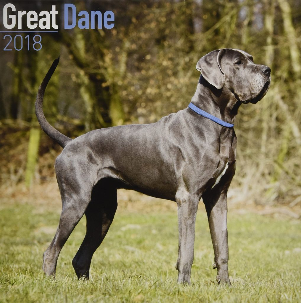 Dangerous Dog Breed: Great Dane