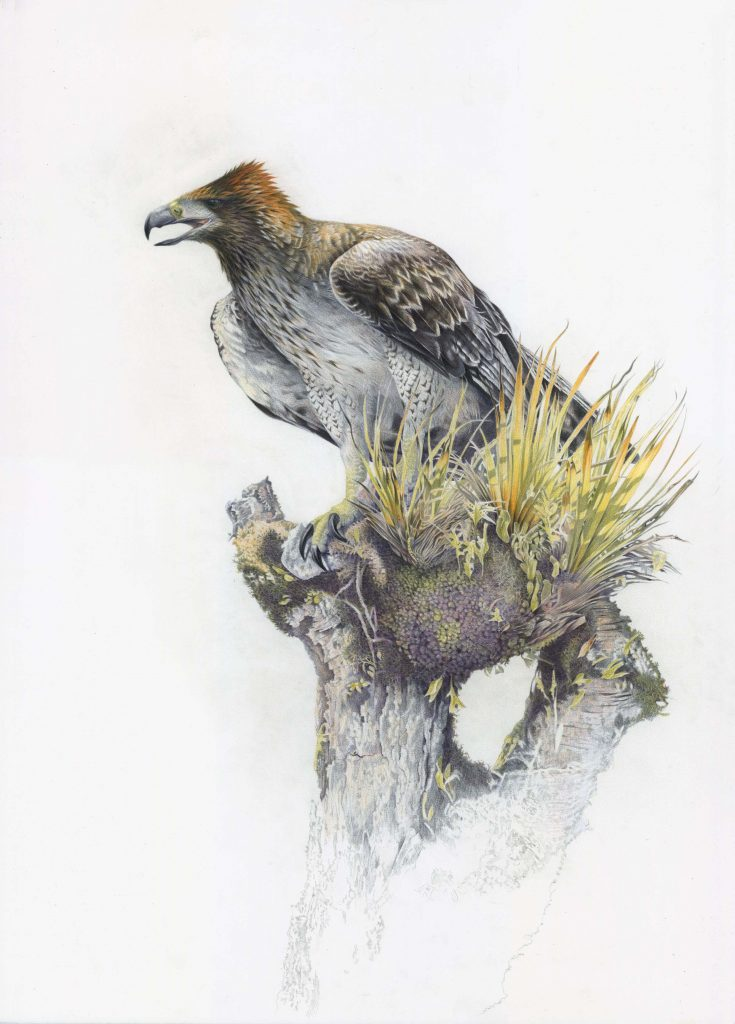 Dangerous animals in the world: Haast's eagle