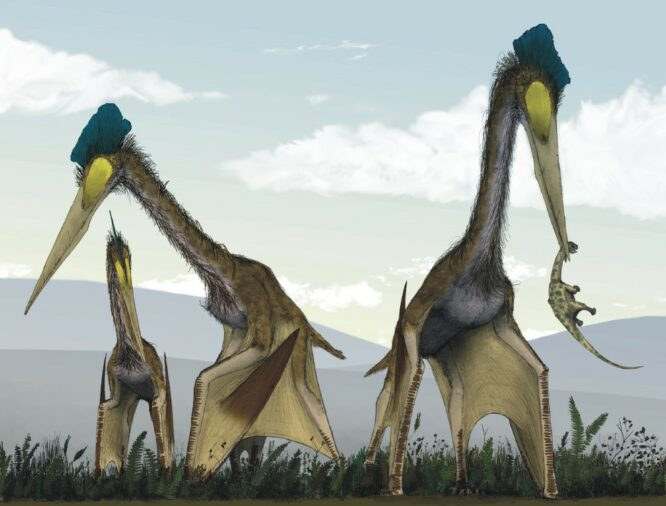 Dangerous animals in the world: Quetzalcoatlus