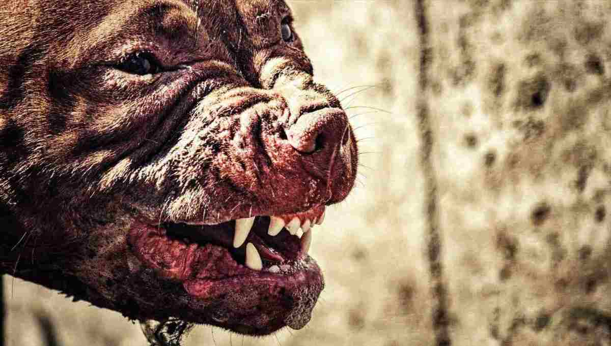 Dangerous Dog Breed:The World's 10 Most Deadly Dog Breeds