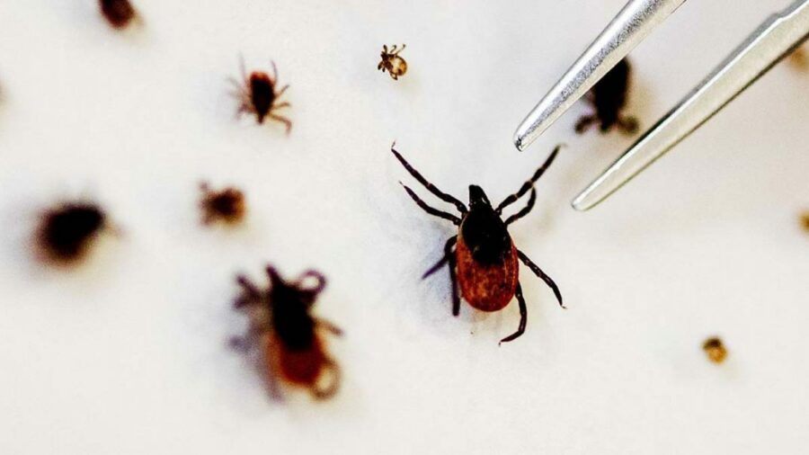Tick Borne Infected 60 People in China with 7 Deaths